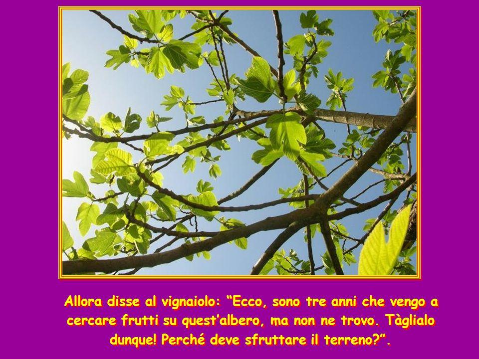Allora disse al vignaiolo: Ecco, sono tre anni che vengo a cercare frutti su quest'albero, ma non ne trovo. Tàglialo dunque! Perché deve sfruttare il terreno .