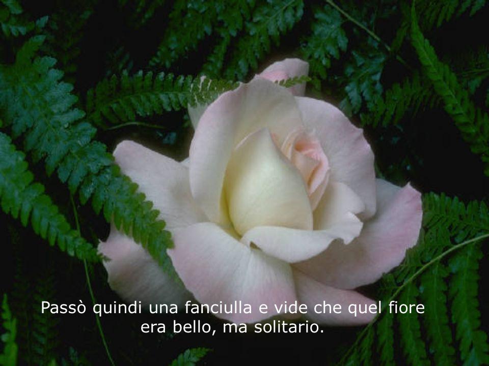 Passò quindi una fanciulla e vide che quel fiore era bello, ma solitario.