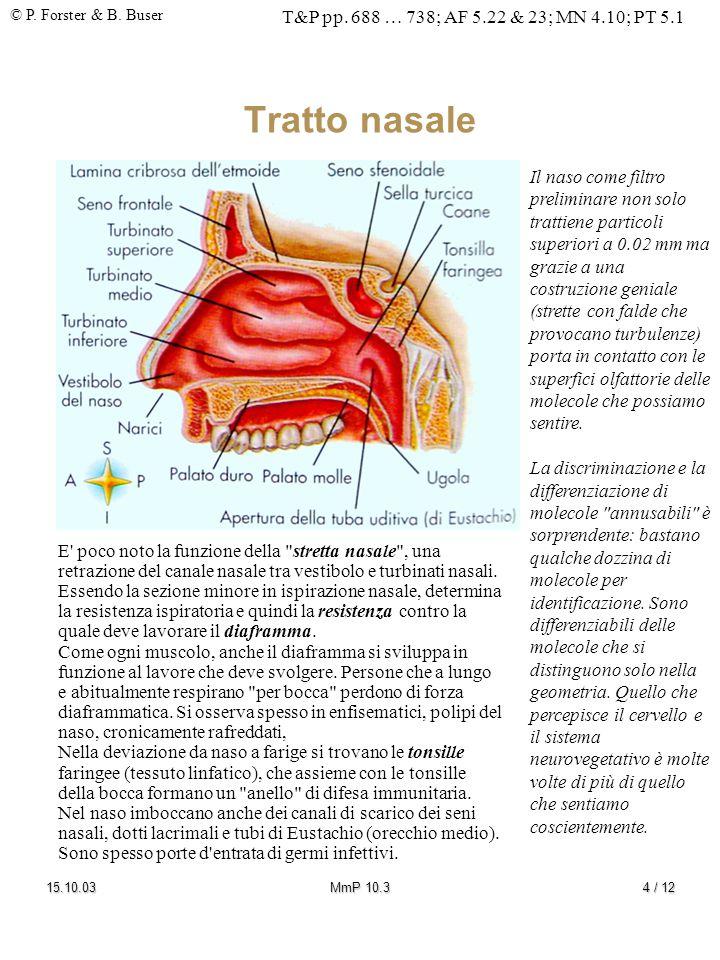 Tratto nasale