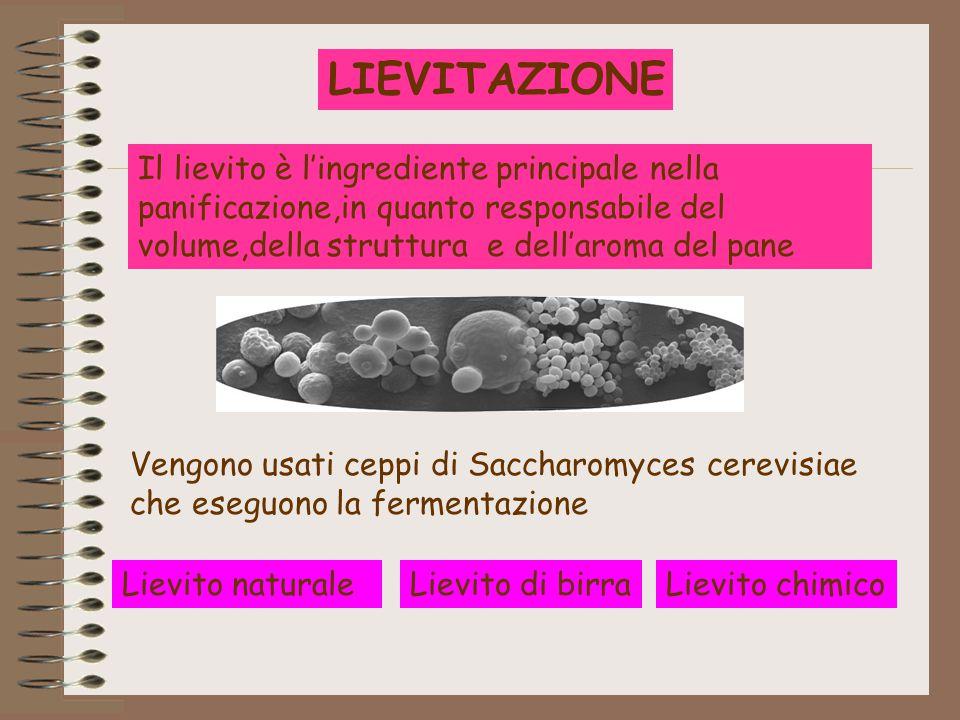 LIEVITAZIONE Il lievito è l'ingrediente principale nella panificazione,in quanto responsabile del volume,della struttura e dell'aroma del pane.