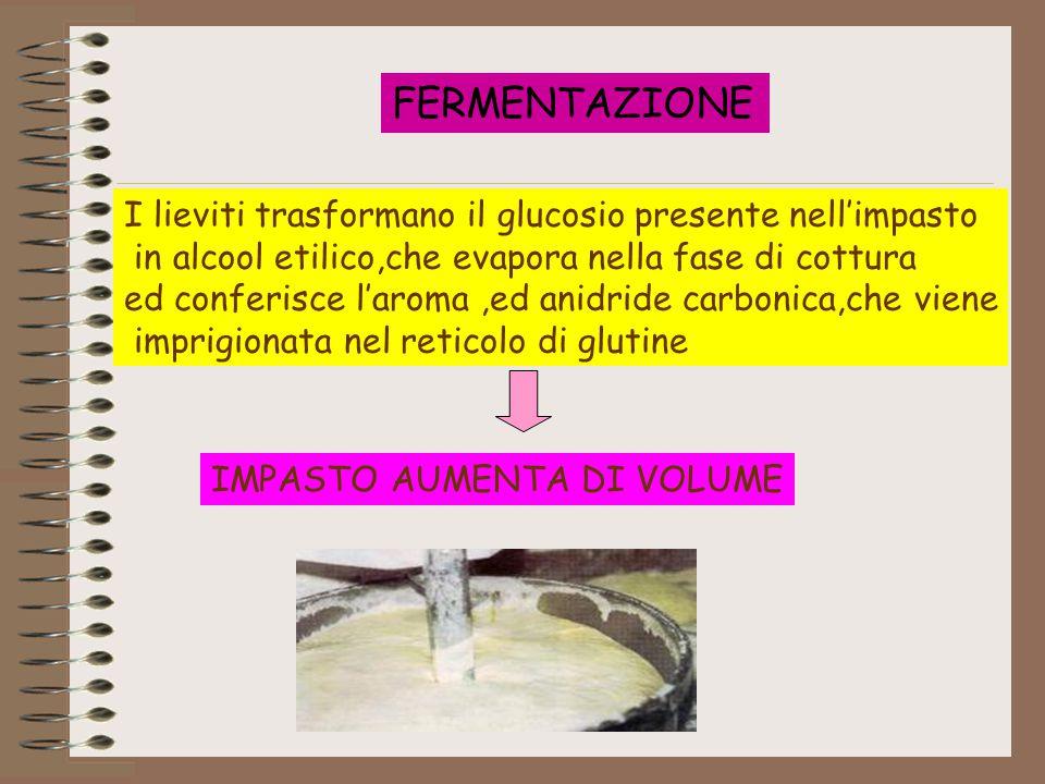 FERMENTAZIONE I lieviti trasformano il glucosio presente nell'impasto