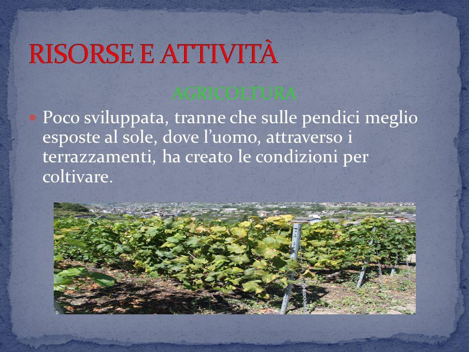 RISORSE E ATTIVITÀ AGRICOLTURA