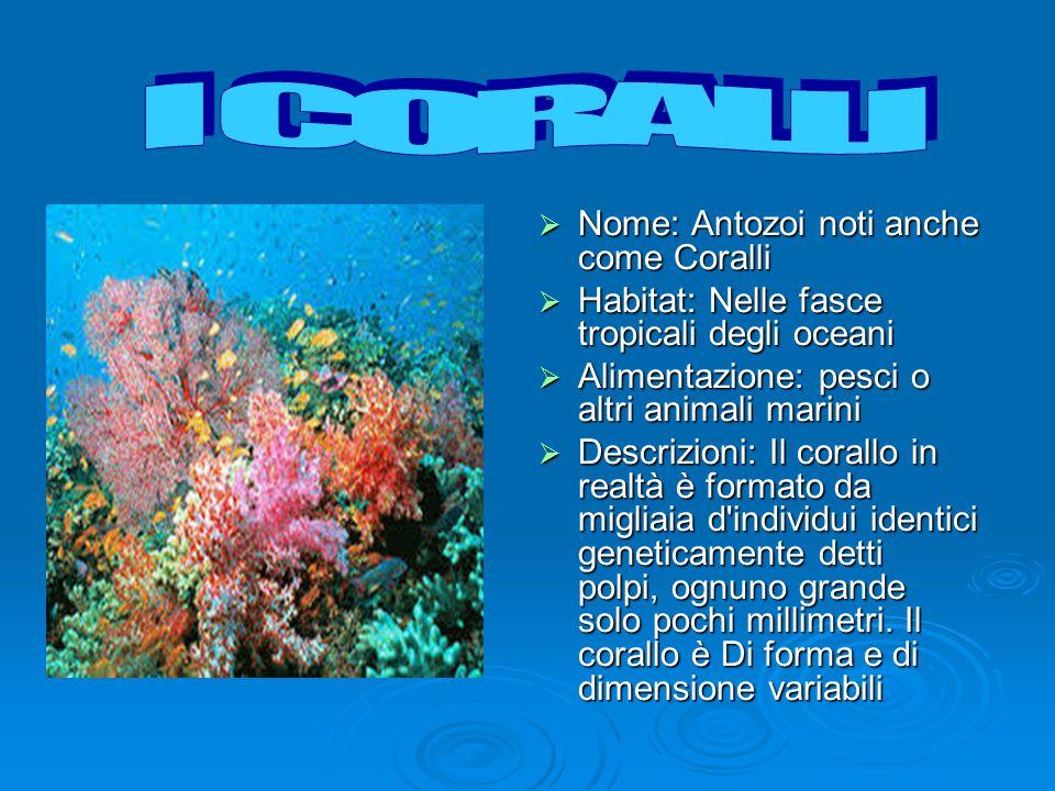 I CORALLI Nome: Antozoi noti anche come Coralli