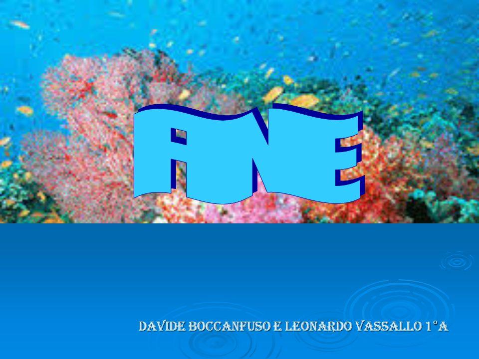 FINE DAVIDE BOCCANFUSO E LEONARDO VASSALLO 1°a
