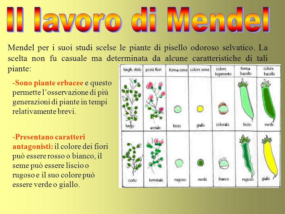 Il lavoro di Mendel