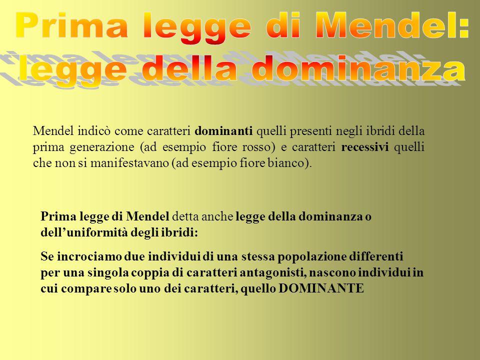 Prima legge di Mendel: legge della dominanza