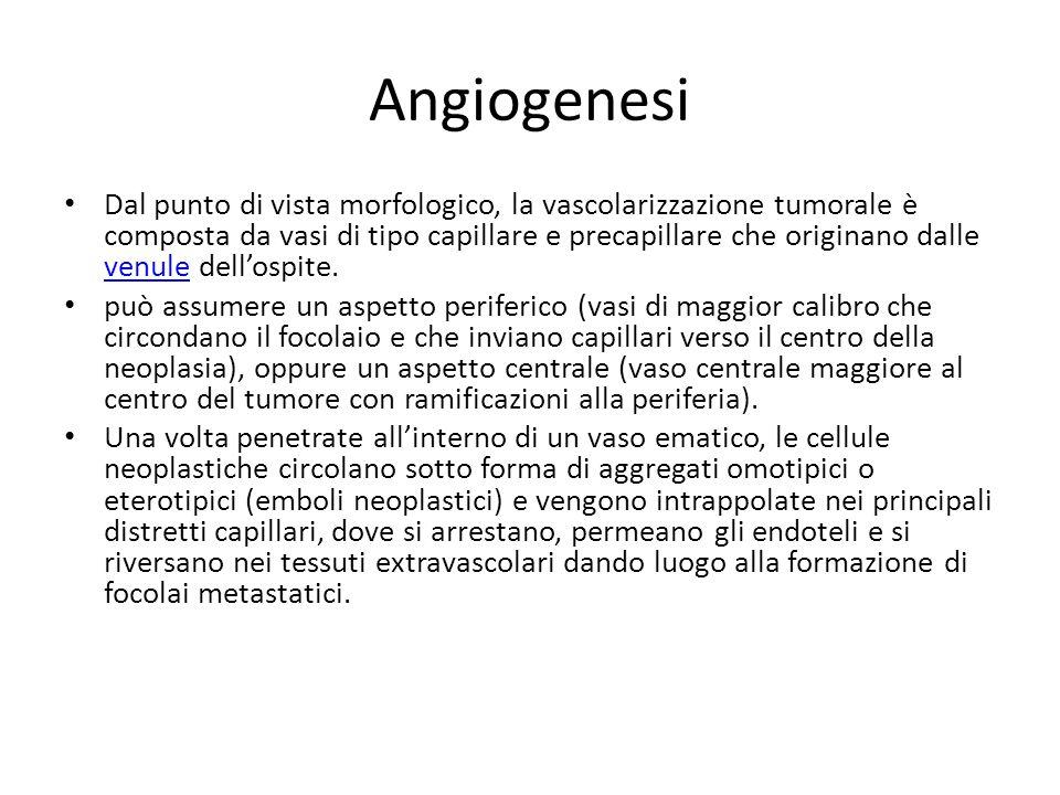 Angiogenesi