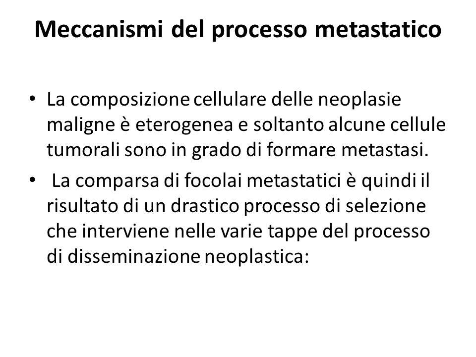 Meccanismi del processo metastatico