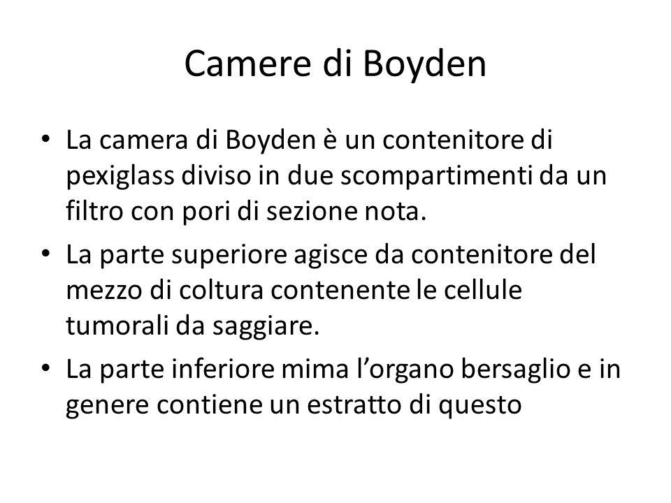 Camere di Boyden La camera di Boyden è un contenitore di pexiglass diviso in due scompartimenti da un filtro con pori di sezione nota.