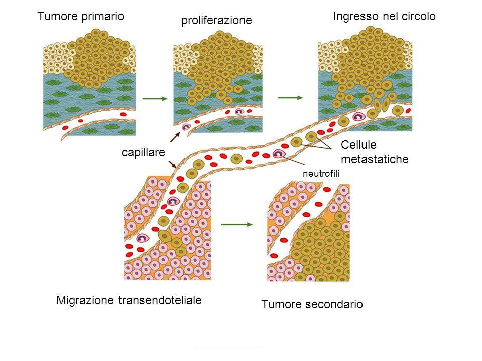 Migrazione transendoteliale Tumore secondario