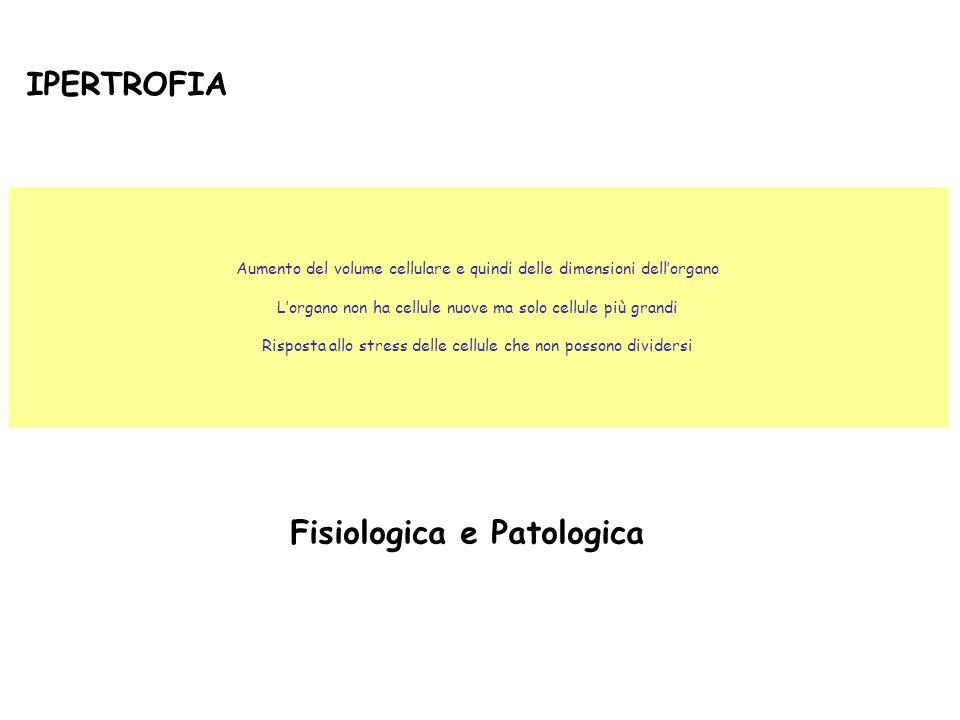 Fisiologica e Patologica