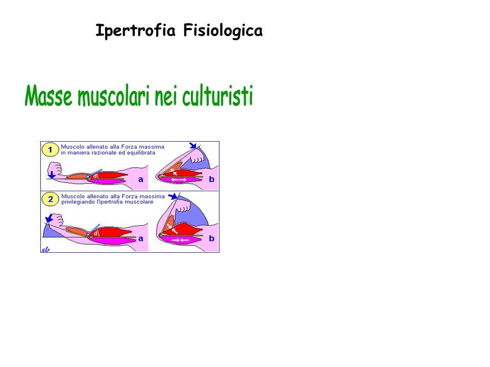 Masse muscolari nei culturisti