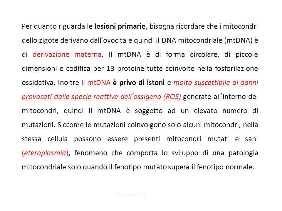 Per quanto riguarda le lesioni primarie, bisogna ricordare che i mitocondri dello zigote derivano dall'ovocita e quindi il DNA mitocondriale (mtDNA) è di derivazione materna. Il mtDNA è di forma circolare, di piccole dimensioni e codifica per 13 proteine tutte coinvolte nella fosforilazione ossidativa. Inoltre il mtDNA è privo di istoni e molto suscettibile ai danni provocati dalle specie reattive dell'ossigeno (ROS) generate all'interno dei mitocondri, quindi il mtDNA è soggetto ad un elevato numero di mutazioni. Siccome le mutazioni coinvolgono solo alcuni mitocondri, nella stessa cellula possono essere presenti mitocondri mutati e sani (eteroplasmia), fenomeno che comporta lo sviluppo di una patologia mitocondriale solo quando il fenotipo mutato supera il fenotipo normale.