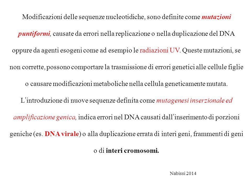 Modificazioni delle sequenze nucleotidiche, sono definite come mutazioni puntiformi, causate da errori nella replicazione o nella duplicazione del DNA oppure da agenti esogeni come ad esempio le radiazioni UV. Queste mutazioni, se non corrette, possono comportare la trasmissione di errori genetici alle cellule figlie o causare modificazioni metaboliche nella cellula geneticamente mutata. L'introduzione di nuove sequenze definita come mutagenesi inserzionale ed amplificazione genica, indica errori nel DNA causati dall'inserimento di porzioni geniche (es. DNA virale) o alla duplicazione errata di interi geni, frammenti di geni o di interi cromosomi.
