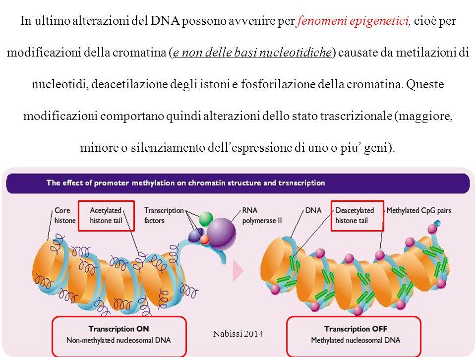 In ultimo alterazioni del DNA possono avvenire per fenomeni epigenetici, cioè per modificazioni della cromatina (e non delle basi nucleotidiche) causate da metilazioni di nucleotidi, deacetilazione degli istoni e fosforilazione della cromatina. Queste modificazioni comportano quindi alterazioni dello stato trascrizionale (maggiore, minore o silenziamento dell'espressione di uno o piu' geni).