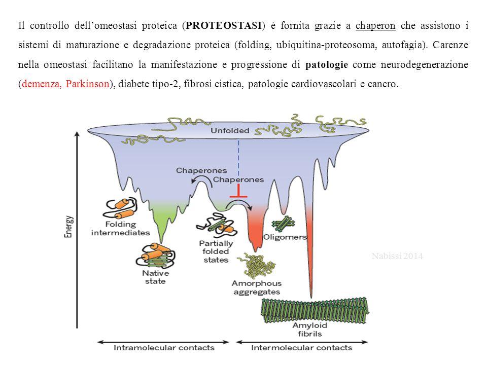 Il controllo dell'omeostasi proteica (PROTEOSTASI) è fornita grazie a chaperon che assistono i sistemi di maturazione e degradazione proteica (folding, ubiquitina-proteosoma, autofagia). Carenze nella omeostasi facilitano la manifestazione e progressione di patologie come neurodegenerazione (demenza, Parkinson), diabete tipo-2, fibrosi cistica, patologie cardiovascolari e cancro.