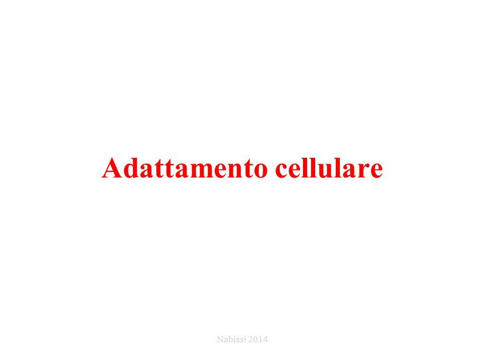 Adattamento cellulare