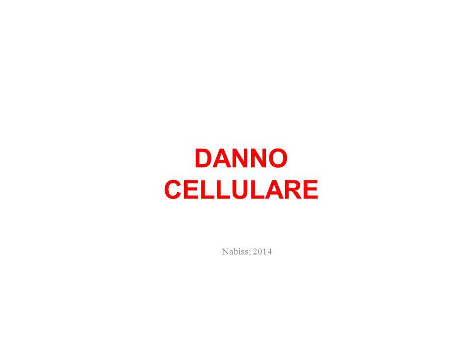 DANNO CELLULARE Nabissi 2014
