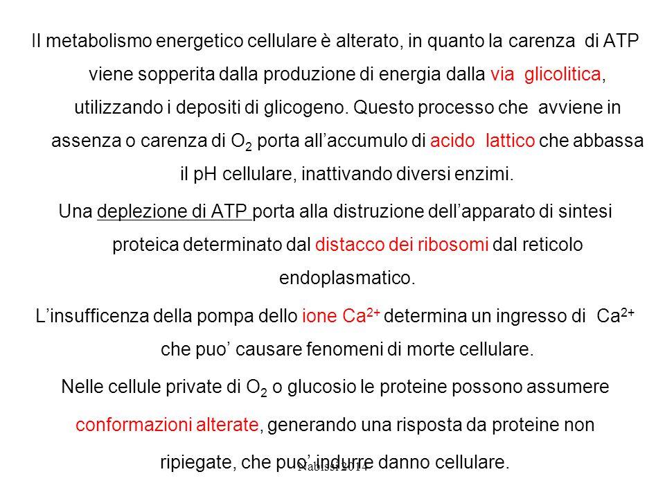 Nelle cellule private di O2 o glucosio le proteine possono assumere