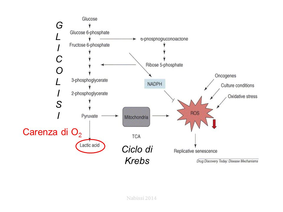 GLICOLISI Carenza di O2 Ciclo di Krebs Nabissi 2014