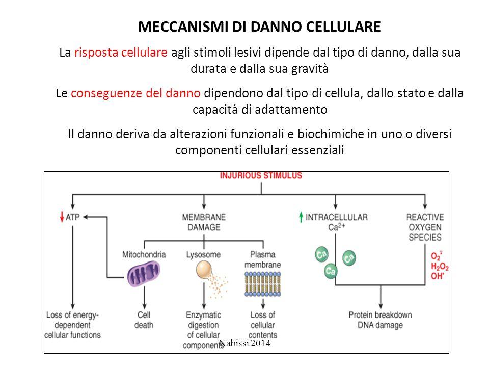 MECCANISMI DI DANNO CELLULARE