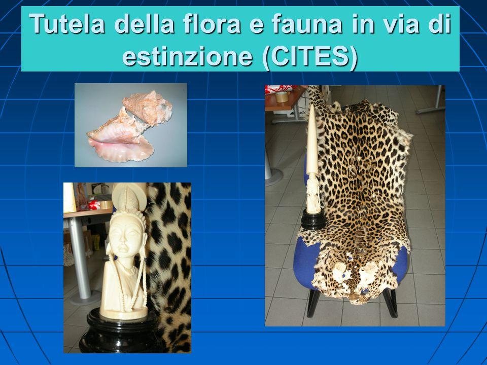 Tutela della flora e fauna in via di estinzione (CITES)