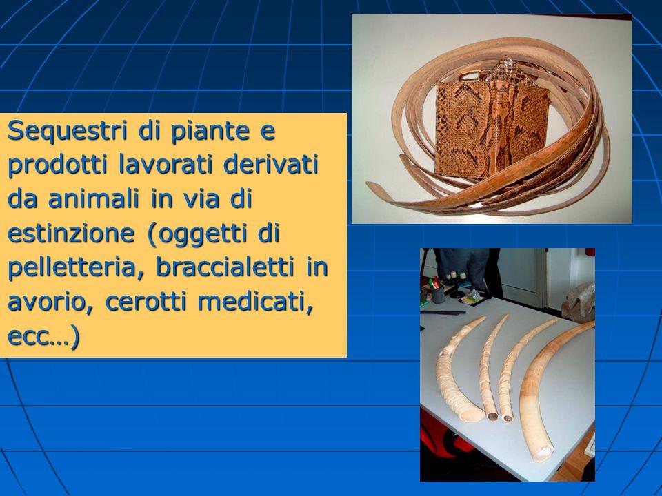 Sequestri di piante e prodotti lavorati derivati. da animali in via di. estinzione (oggetti di. pelletteria, braccialetti in.
