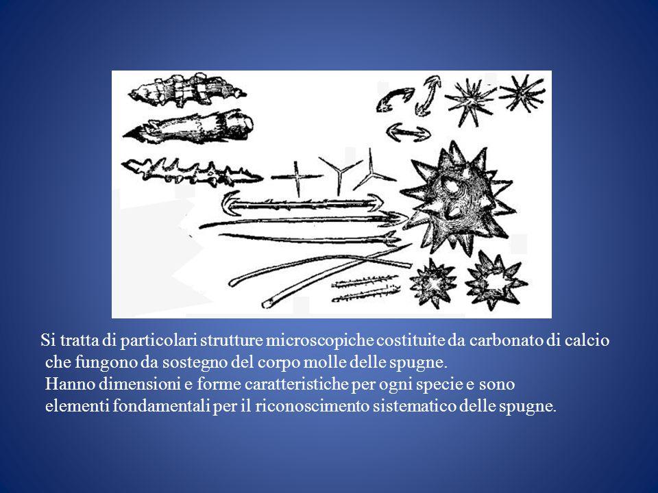 Si tratta di particolari strutture microscopiche costituite da carbonato di calcio