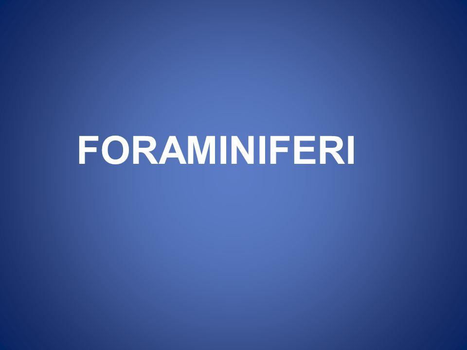 FORAMINIFERI