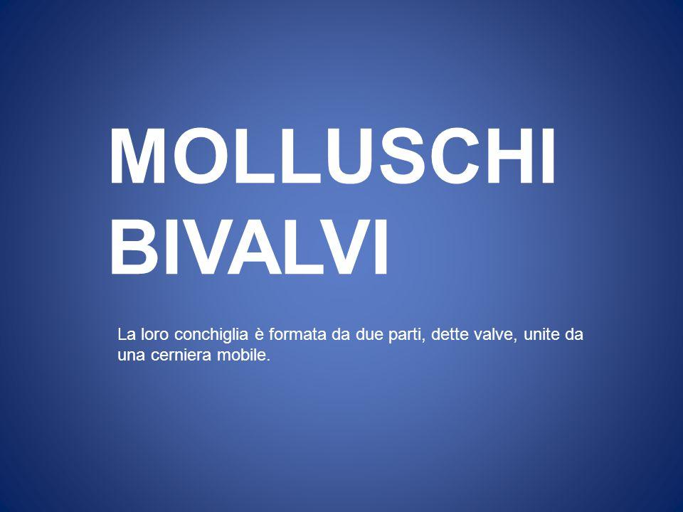 MOLLUSCHI BIVALVI.