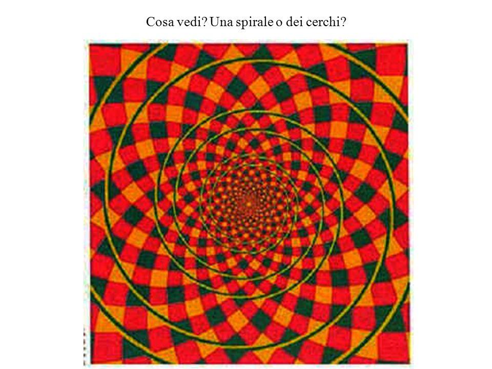 Cosa vedi Una spirale o dei cerchi