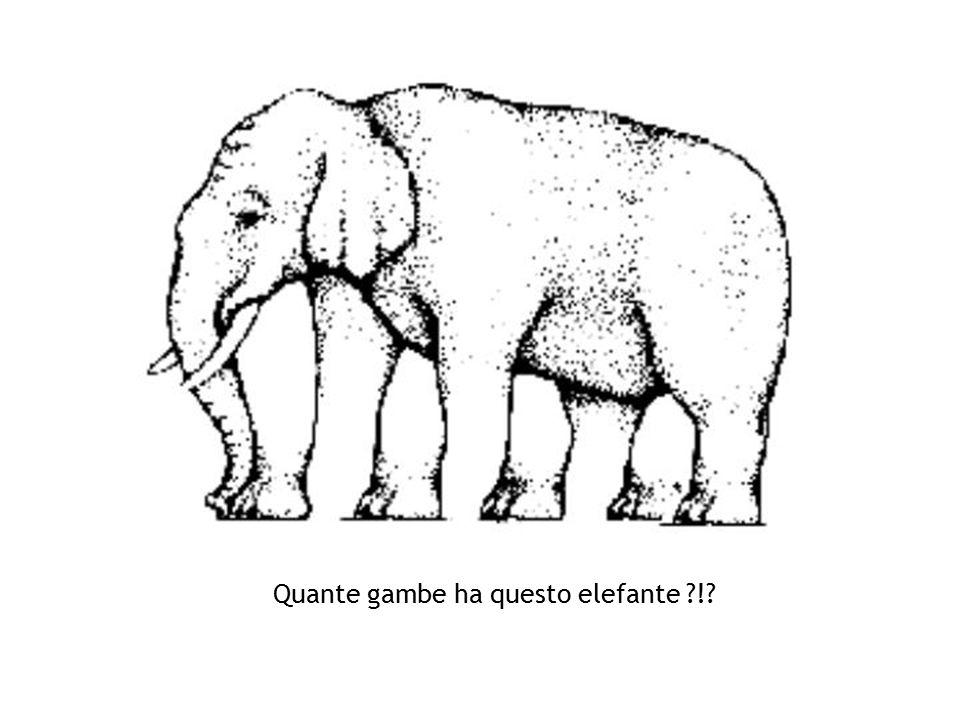 Quante gambe ha questo elefante !