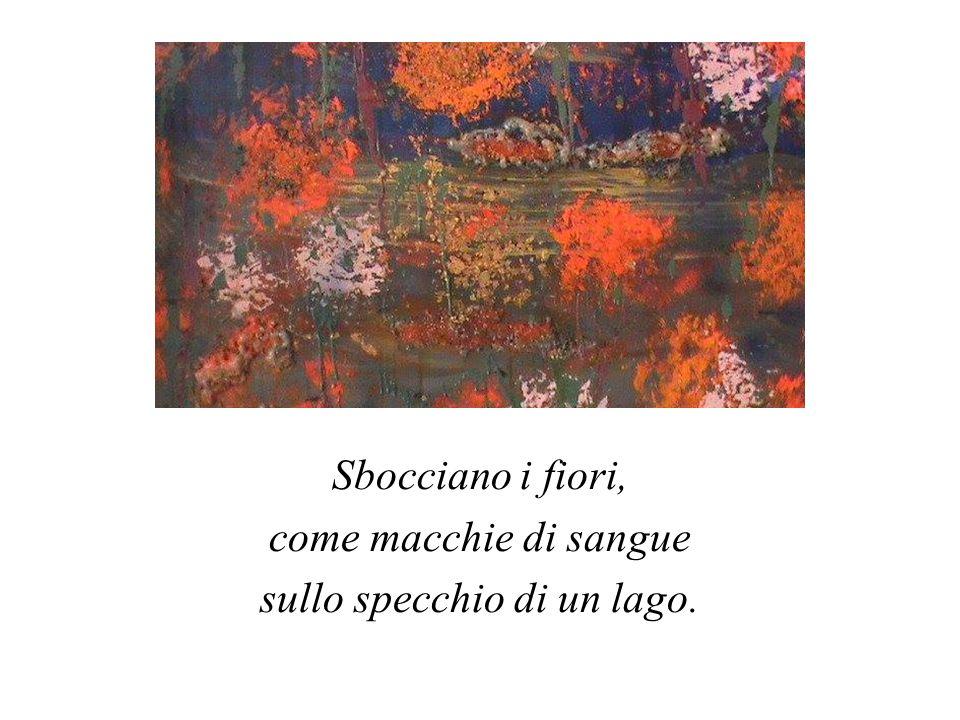 Sbocciano i fiori, come macchie di sangue sullo specchio di un lago.