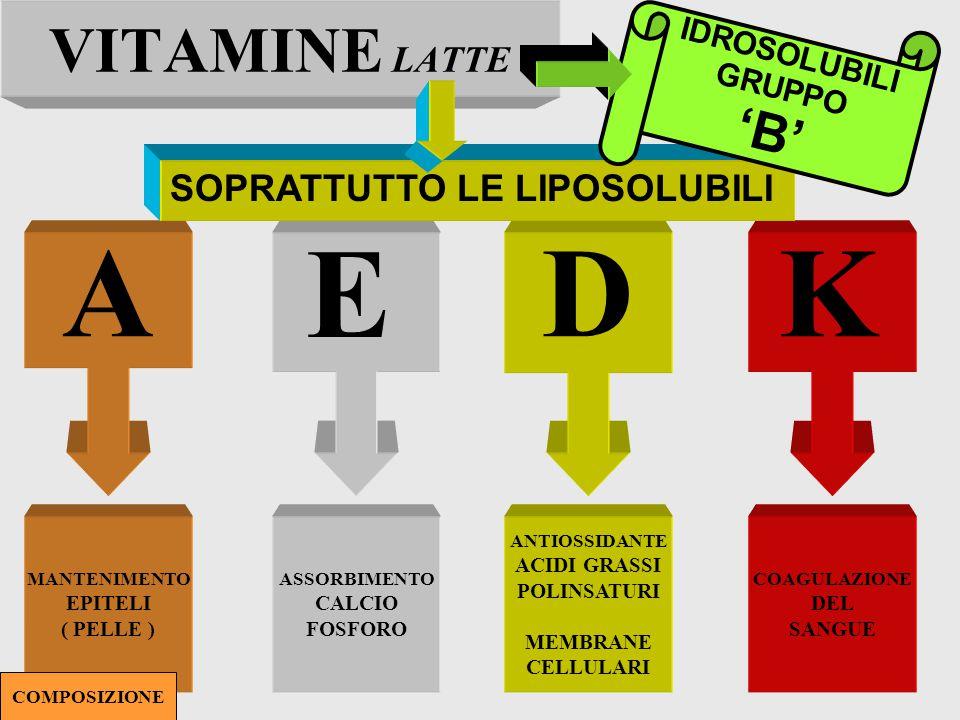 A E D K VITAMINE LATTE 'B' SOPRATTUTTO LE LIPOSOLUBILI IDROSOLUBILI