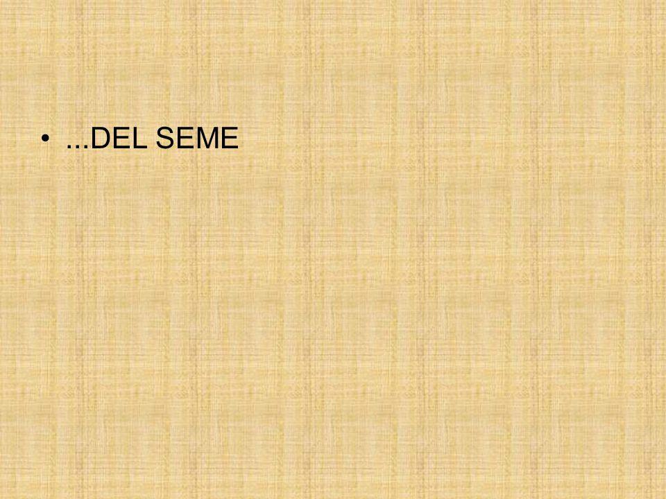 ...DEL SEME