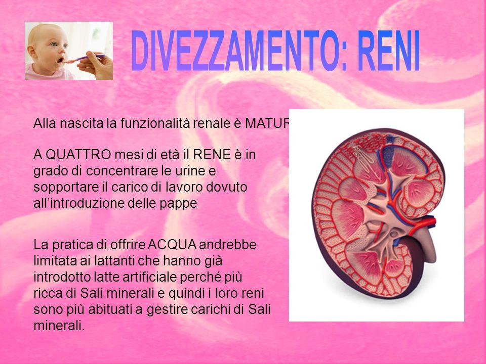 DIVEZZAMENTO: RENI Alla nascita la funzionalità renale è MATURA