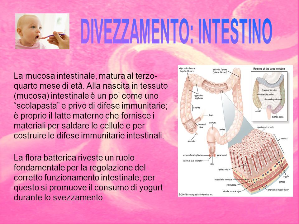 DIVEZZAMENTO: INTESTINO