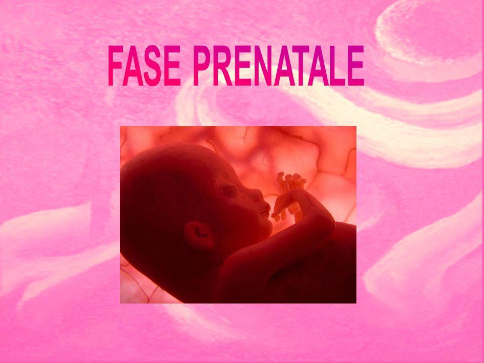 FASE PRENATALE