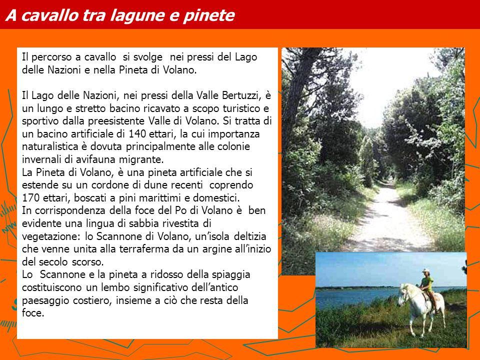 A cavallo tra lagune e pinete