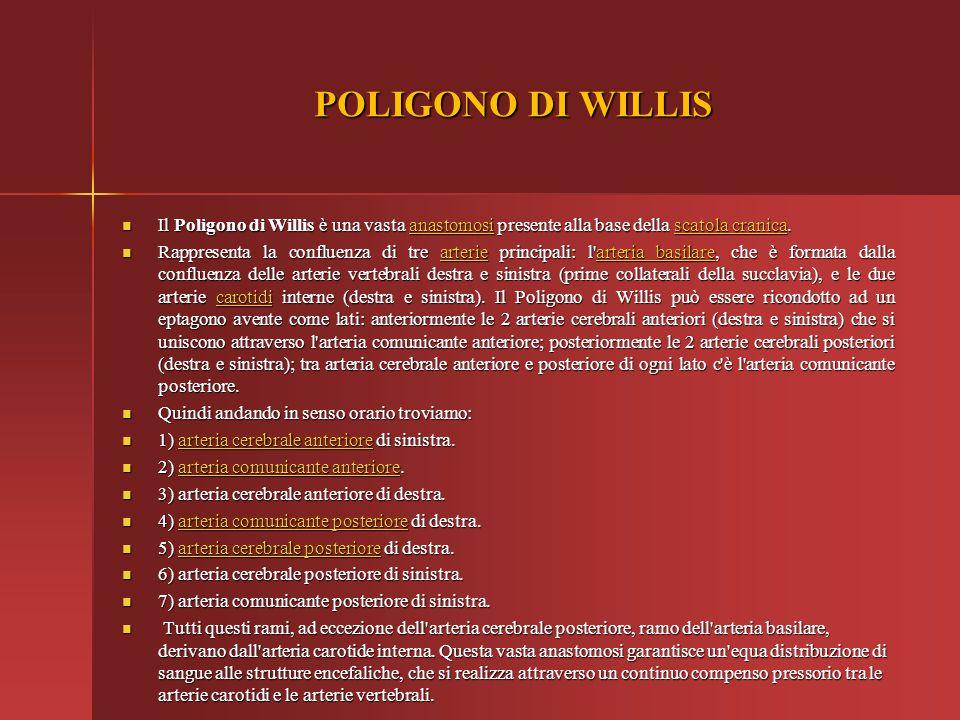 POLIGONO DI WILLIS Il Poligono di Willis è una vasta anastomosi presente alla base della scatola cranica.
