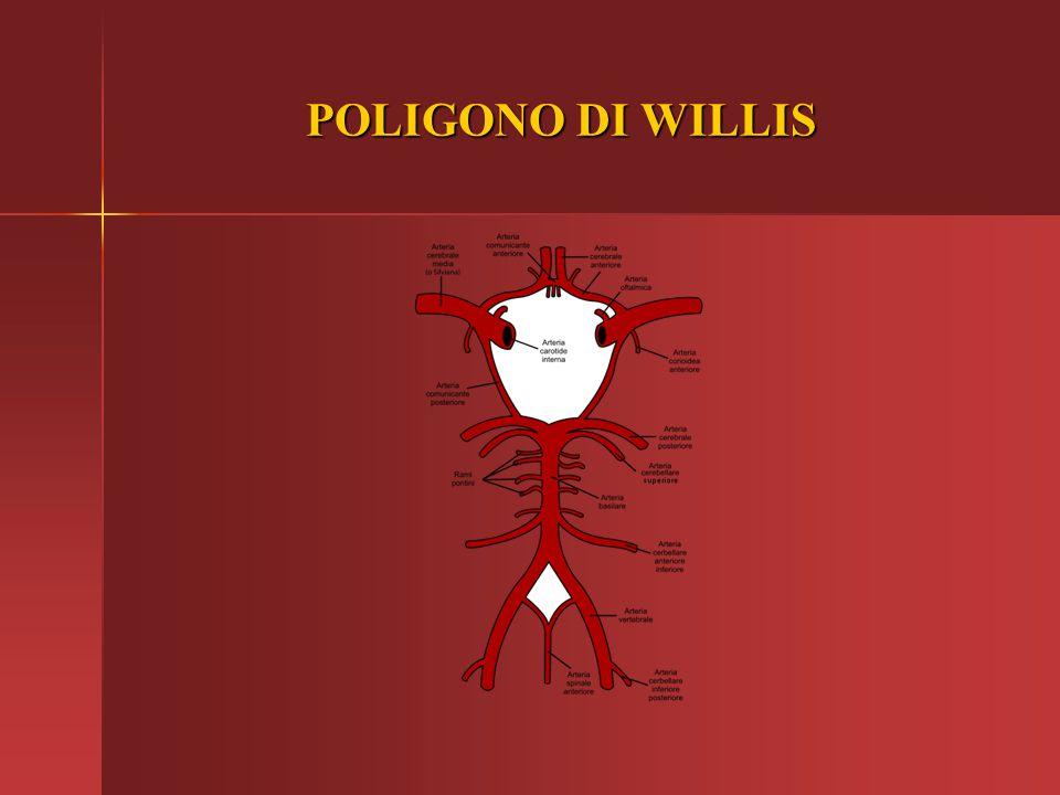 POLIGONO DI WILLIS