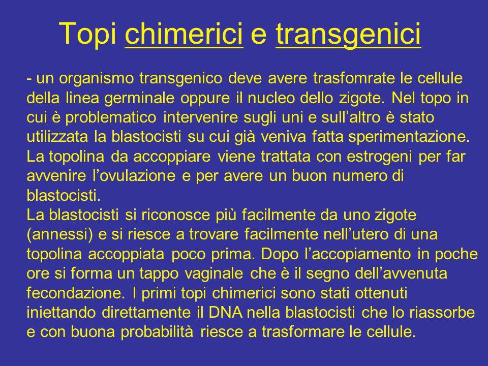 Topi chimerici e transgenici
