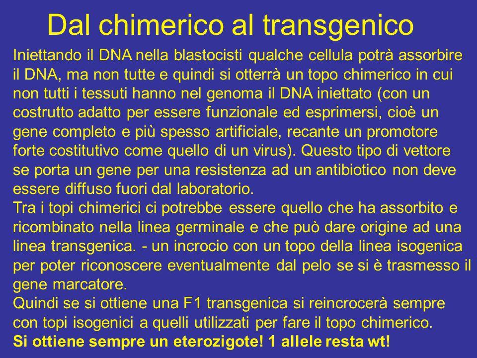 Dal chimerico al transgenico