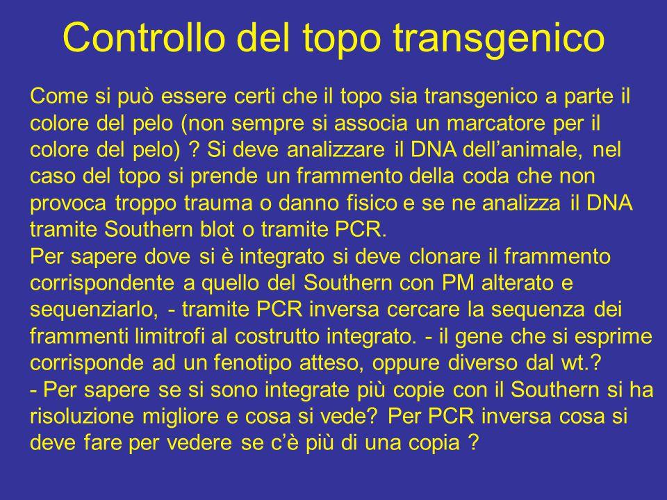 Controllo del topo transgenico