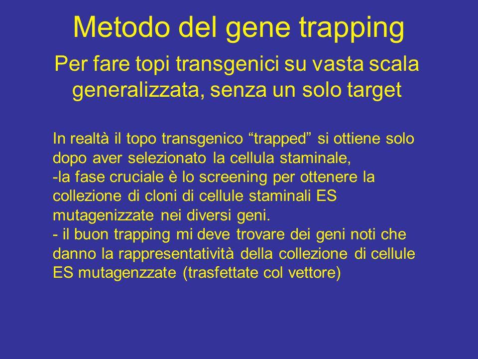Metodo del gene trapping