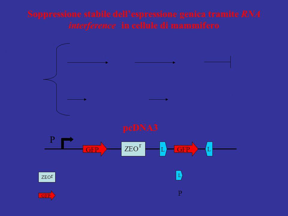 Soppressione stabile dell'espressione genica tramite RNA interference in cellule di mammifero
