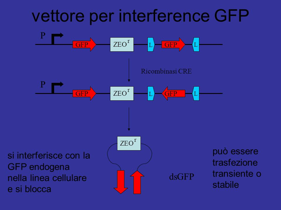vettore per interference GFP