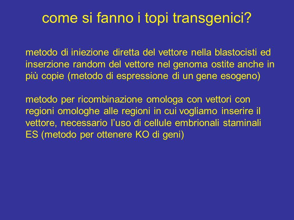 come si fanno i topi transgenici