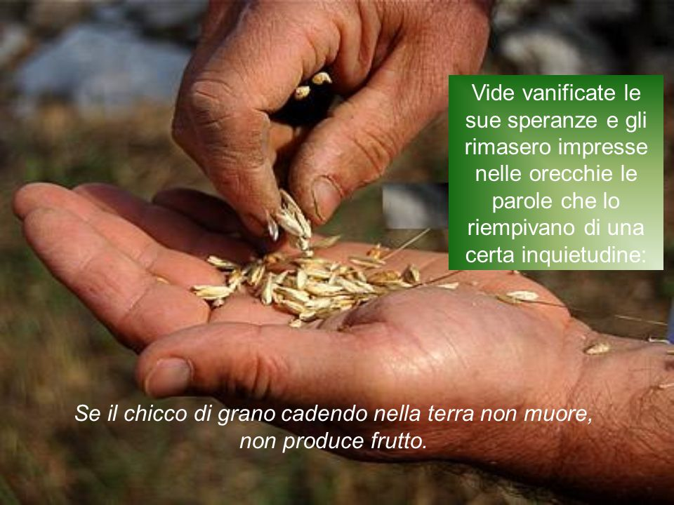 Se il chicco di grano cadendo nella terra non muore,