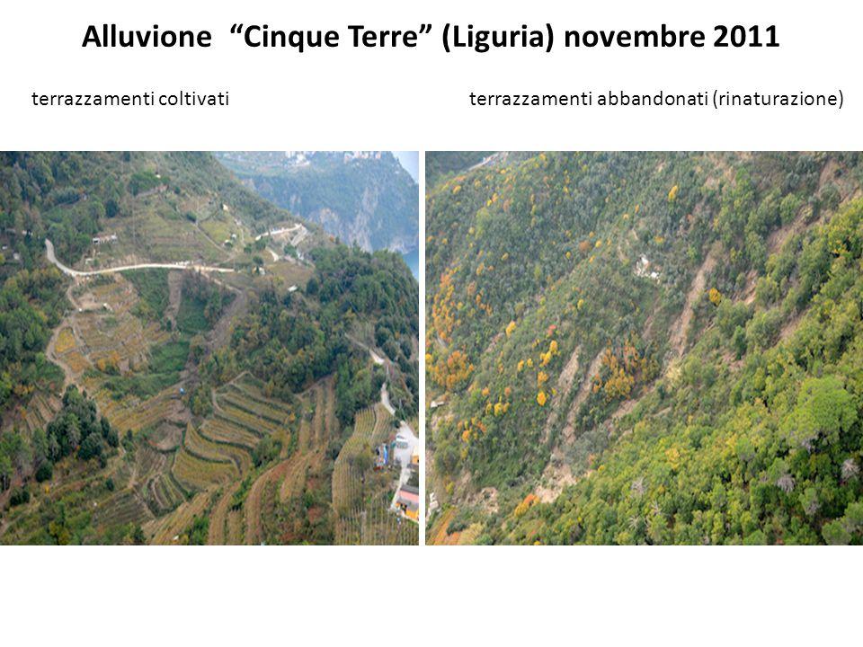 Alluvione Cinque Terre (Liguria) novembre 2011 terrazzamenti coltivati terrazzamenti abbandonati (rinaturazione)
